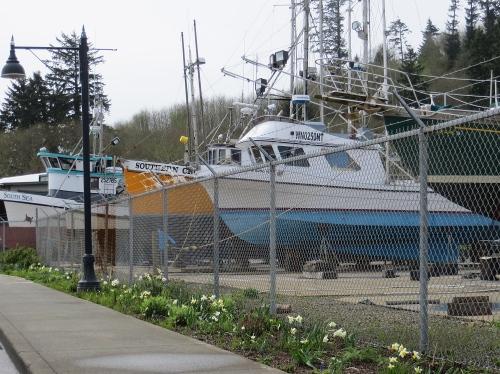 boatyard narcissi