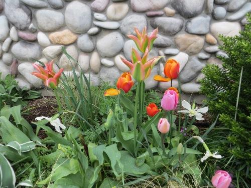 OBS spring bulbs