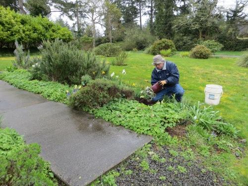 Allan planting in the rain