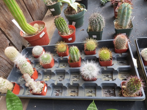and if you like cute little cacti...