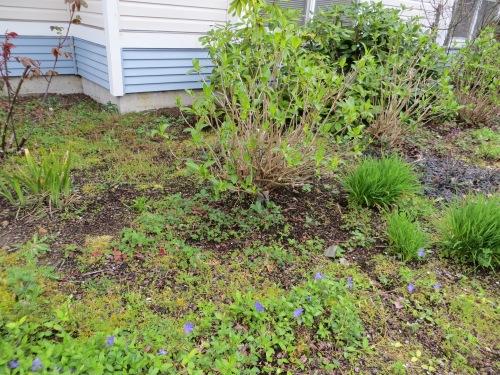 weedy areas