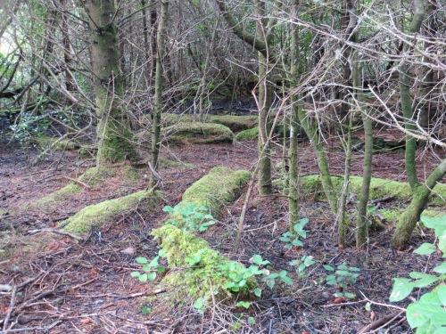 nature's moss garden