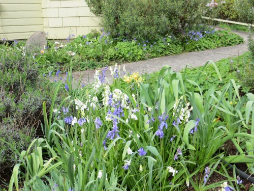 the dreaded scilla invasion