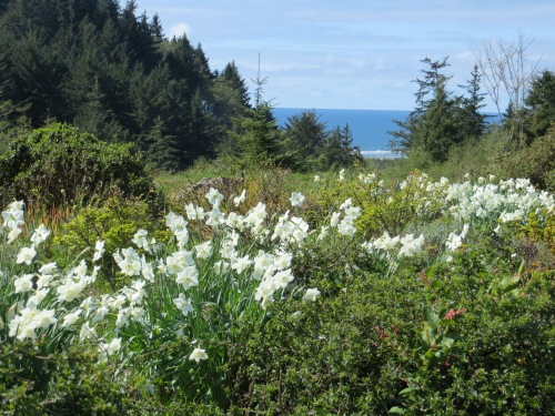 white narcissi and white cresting waves in the distance