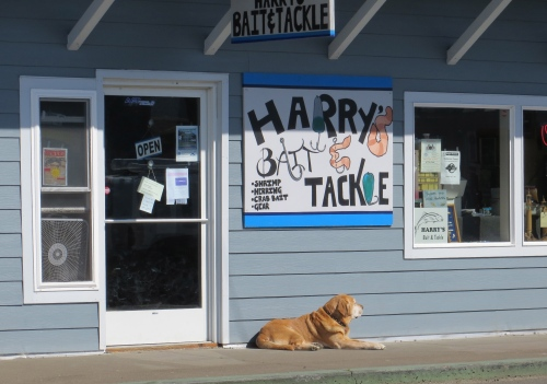 bait and tackle dog