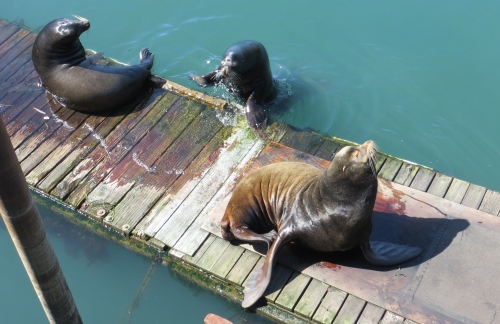 It swam to the less populated end of the dock...