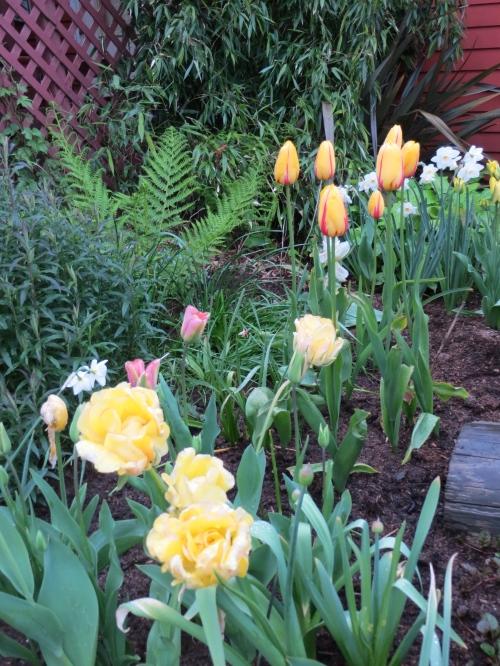 Depot tulips