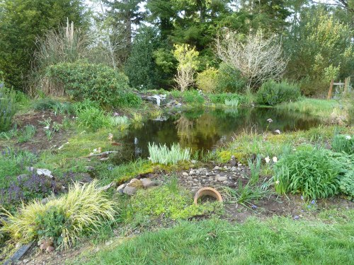 weeded pond bed