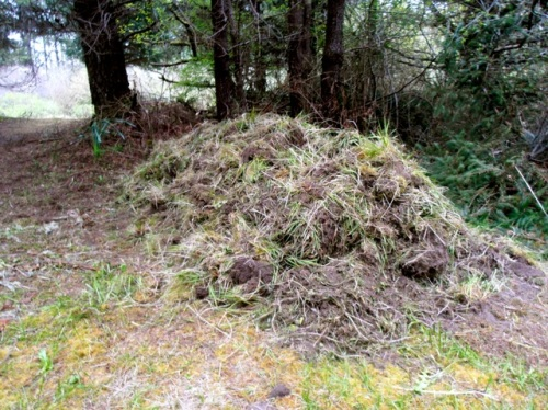 the weed pile!