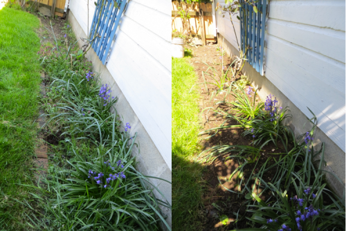 Rose Cottage weedy bed before and after