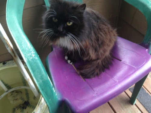 Maddy hates all the other cats so was snoozing on a sunporch chair.