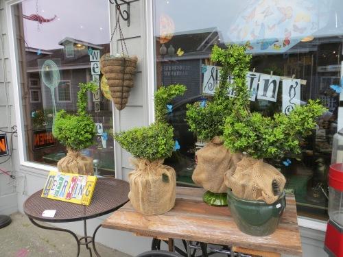 Sarah's topiaries at NIVA green