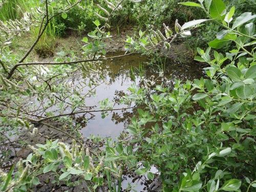 will tadpoles survive?