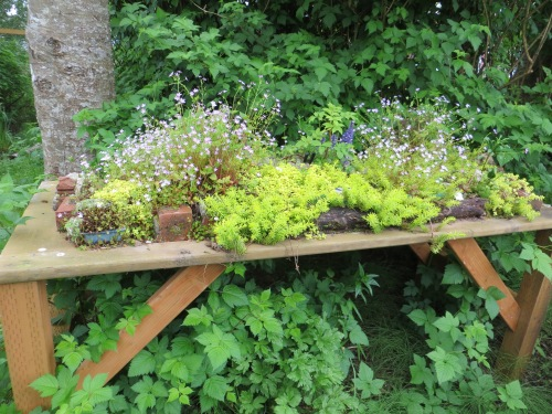 bogsy woods plant table