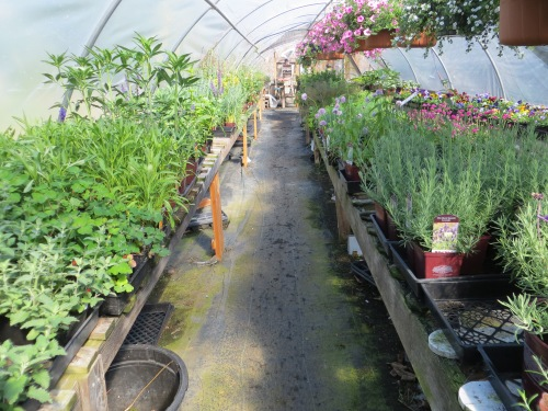 Basket Case herbs and perennials greenhouse