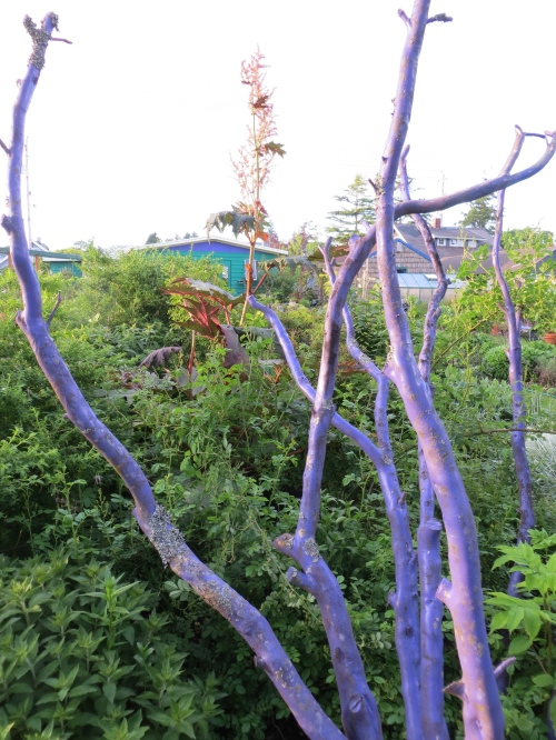 rhubarb behind the purple trunks