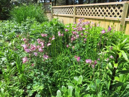 Jo's garden, northwest side