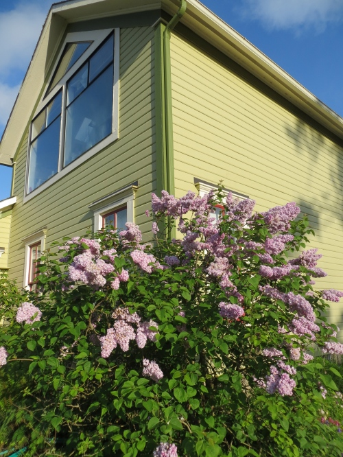 lilac and the north facing studio windows