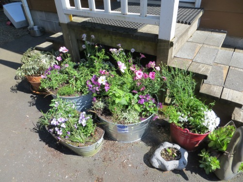 newly planted containers by back porch