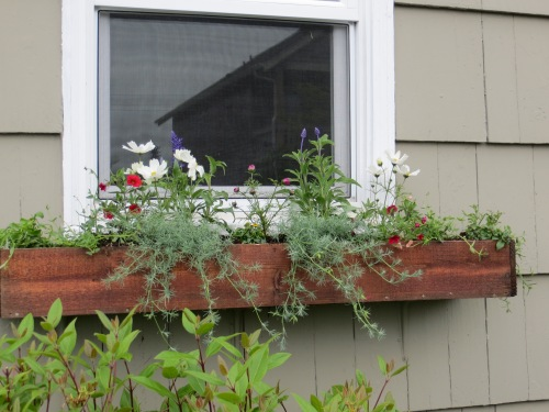 This time, i used bigger plants in the window boxes.  Much more instant than the tiny ones from the last session.