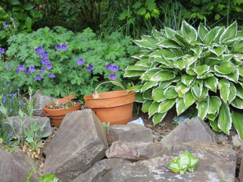 geranium and hosta