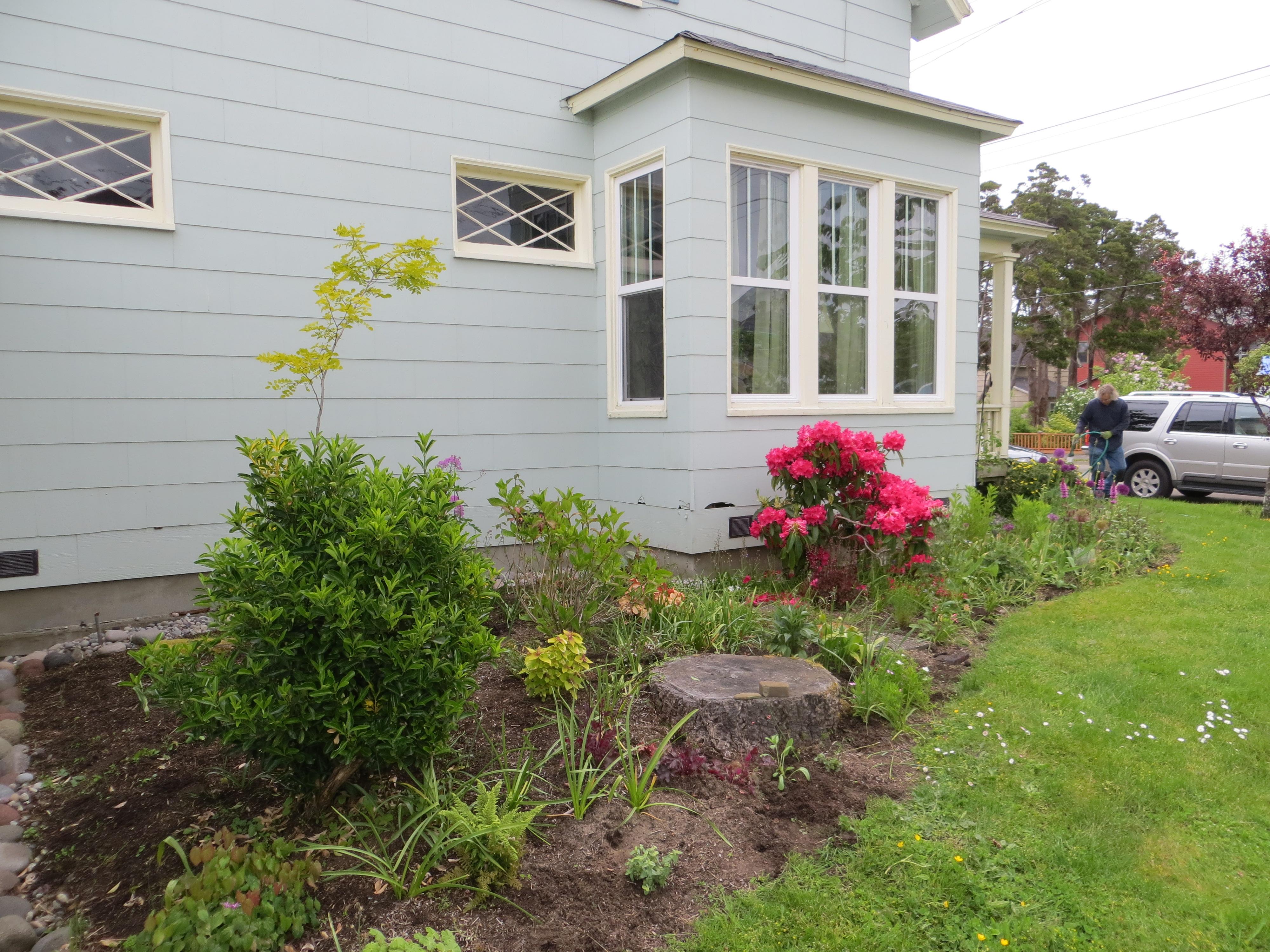 watering aprés planting