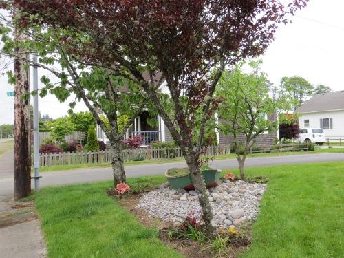 looking east:  Hornbuckle garden is across Pearl Avenue.