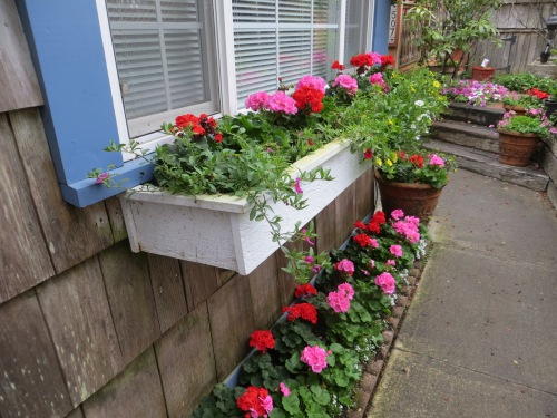 guest house windowbox