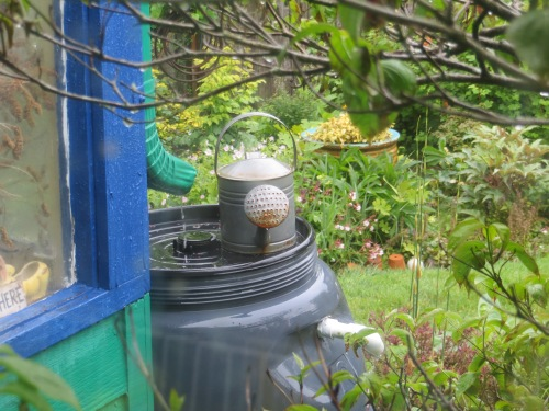 east sunporch rain barrel