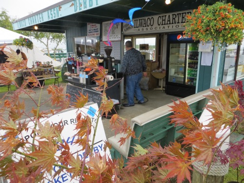 Japanese maples for sale, and Portside Café booth.  (That's the yellow café in whose street planter we plant yellow flowers.)
