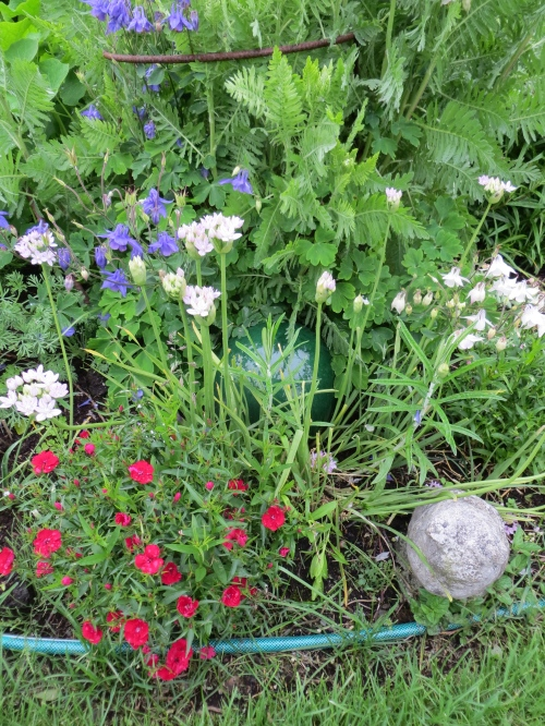 Dianthus and Alliums