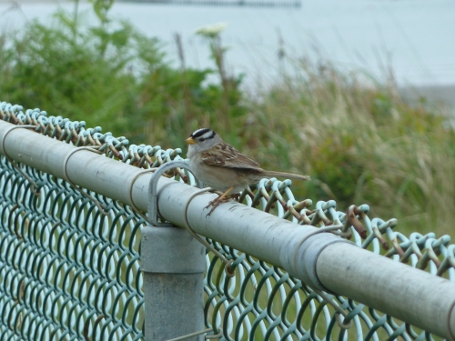 on the lighthouse fence