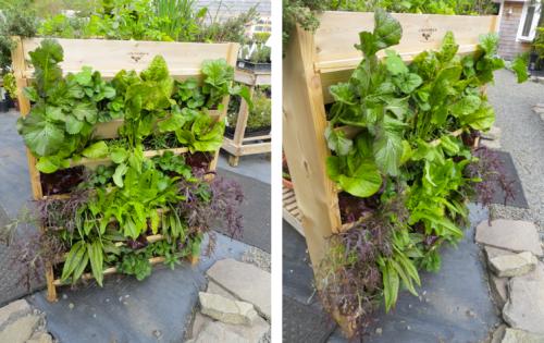 a vertical salad garden