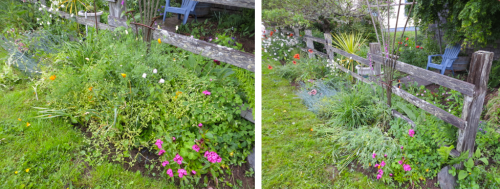 south border, before and after, weeded by Allan