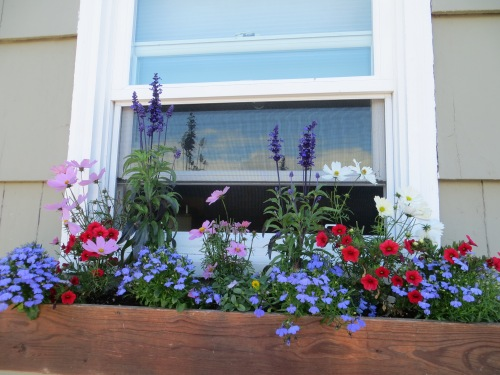 windowbox at south end