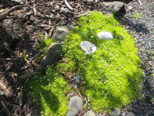 shells and moss