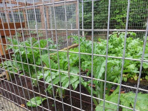 safe veg