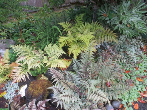 some of Allan's ferns