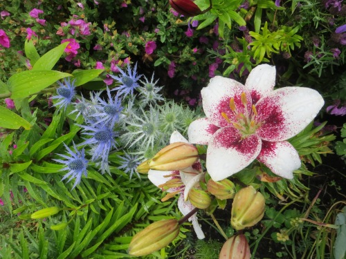 lily and Eryngium