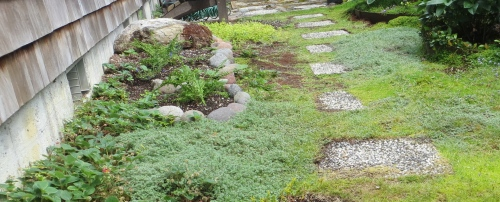 mossy courtyard detail