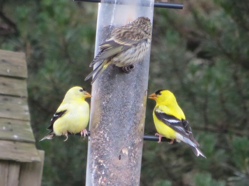 one of Jo's feeders