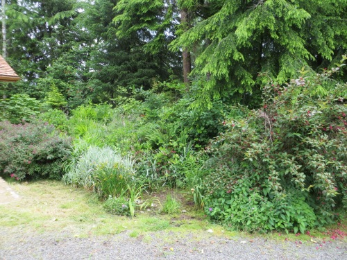 no before picture, but this area had been no longer recognizable as garden!