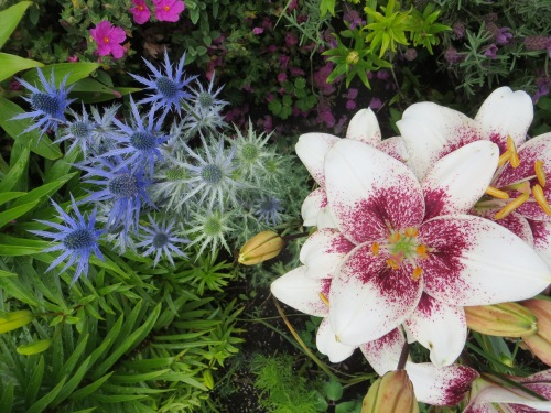 Asiatic lily and Eryngium 'Sapphire Blue'