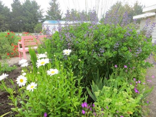 Andersen's west garden