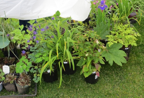 another plant booth:  Seaview's English Nursery