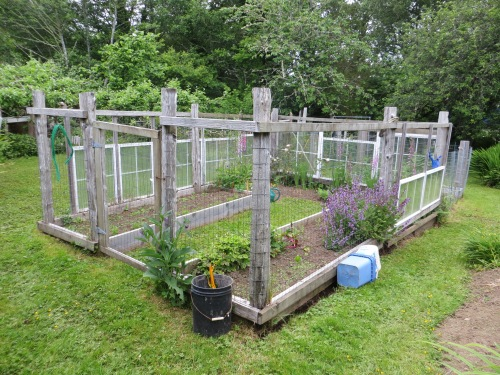 the deer-safe veg garden