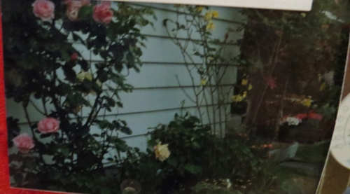Nora's rose garden