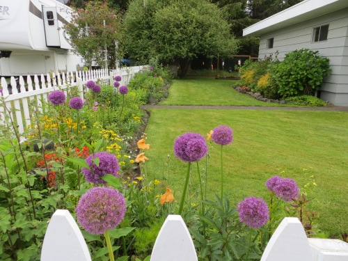 The picket fence garden today