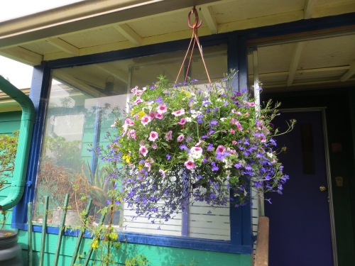 new hanging basket from The Basket Case