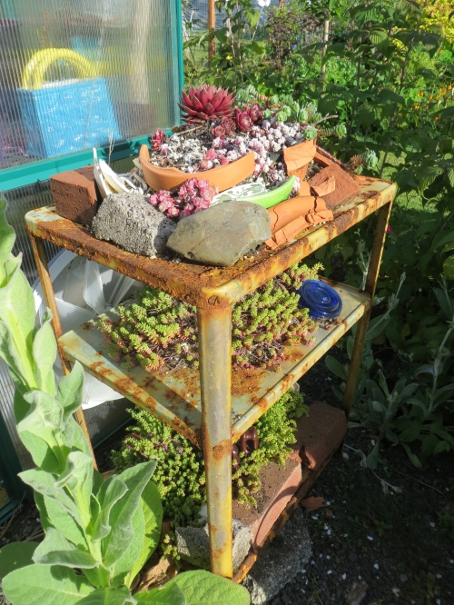 three tier sedum table